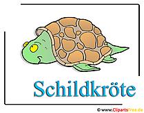 Schildpad clipart gratis