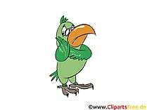 Gründer Papagei Bild, Clipart, Illustration