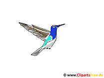 Kolibri Clipart
