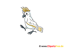 Papagei Clipart