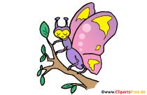 Schmetterling Comoc, Cartoon, Clipart