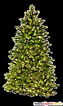 Clipart de sapin vert, illustration, image transparente